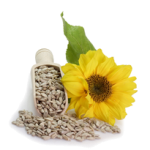 Sunflower-Seed-Oil-276x205