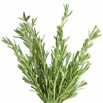 Rosemary-leaves1